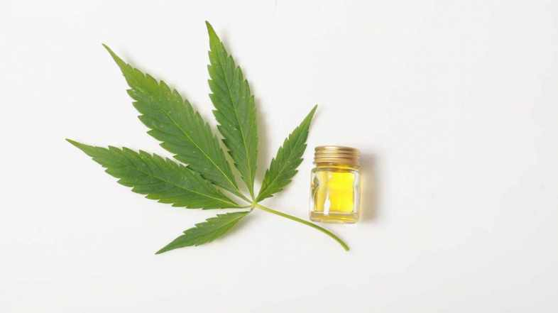 Where Can I Buy Good CBD Oil for Cheap